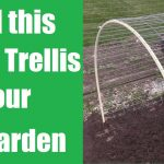 Build this Hoop Trellis to Grow Your Cantaloupe and Watermelon Vertically