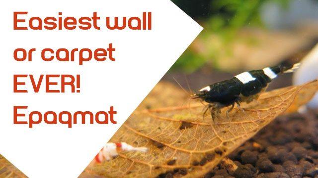 Aquarium Plant Wall or Plant carpet made easy – Songrow Epaqmat