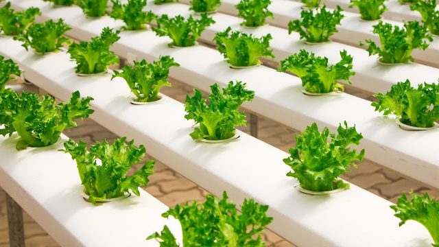 Introduction to hydroponics system-Urdu