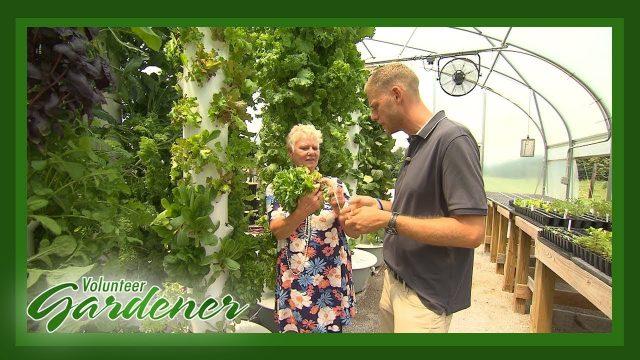 Aeroponics | Volunteer Gardener