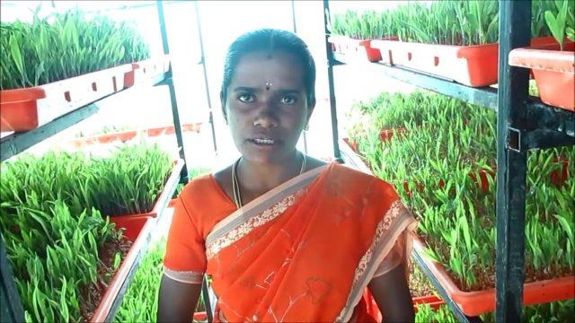 Hydrophonics  tamil மண் இல்லா விவசாயம் ஆர்ஹானிக்