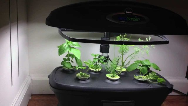 Indoor Gardening in New York