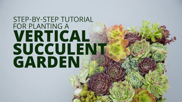 Make a Vertical Succulent Arrangement with the Grow Vert Planter