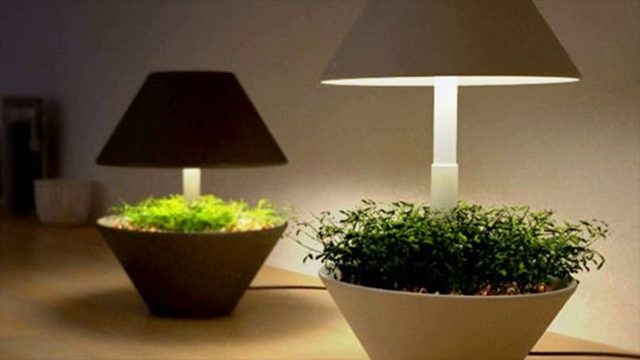 Lightening Tips For Indoor Gardening – Natural Light Filters