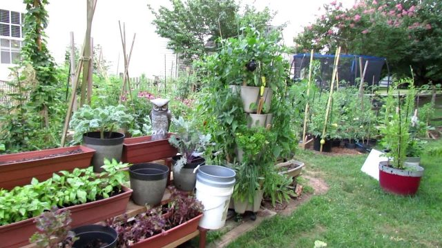 Vegetable Garden Tour & Tips 7/19/2018: Mature Tomatoes & Peppers, Crops to Plant Now