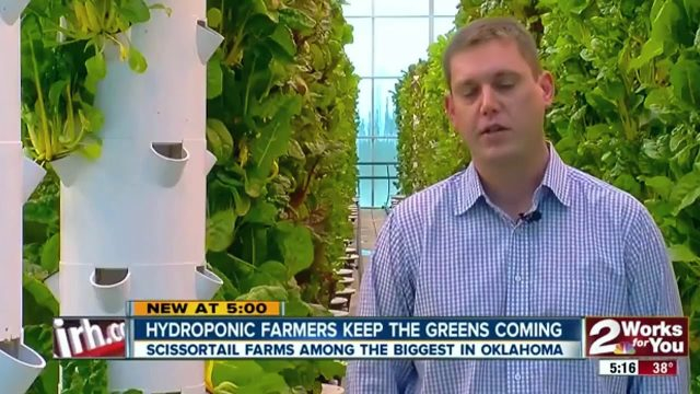 "The world's largest aeroponic farm exploding with food in the middle of a ""food desert"""