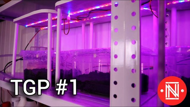 Automated Indoor Garden  (The Garden Project ep. 1)