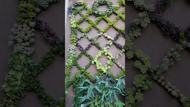 Amazing succulent wall