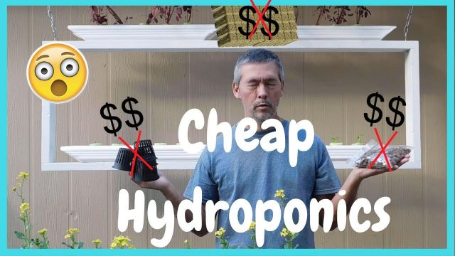 Cheap / Easy DIY Hydroponics