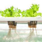HOW TO GROW HYDROPONIC PLANTS |GROW PLANTS ON WATER