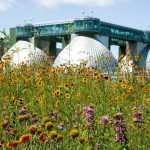 Kingsland Wildflowers Green Roof & Community Space – Project of the Week 7/16/18