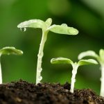 15 Advanced Seed Starting Secrets You Won't Learn At The Garden Center