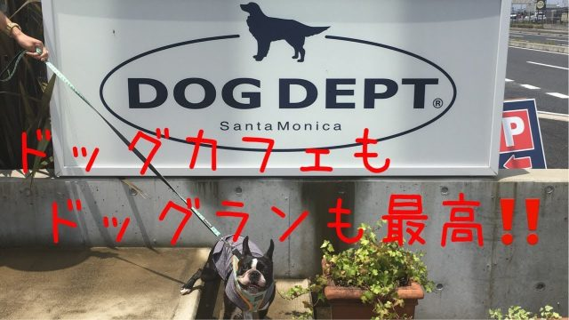 DOG DEPT Garden 木更津に行ってきたよ Boston terrier went to DOG DEPT Garden Kisarazu【RX100M6】