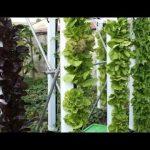 2018 Vertical Farming, Hydroponics & Aquaponics Systems (683)