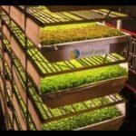 (AeroFarms) the world's biggest vertical farm