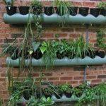 805 – Use of PVC Pipe as Vertical Planter (Hindi /Urdu) 31/8/18