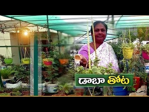 Roof Gardening | Successfully Implemented by A Middle Aged Couple | at Dharapalem of Vizag