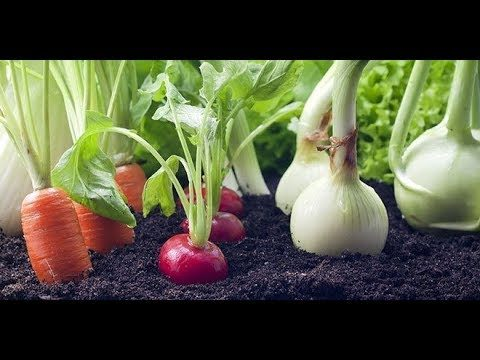 How to Grow a Vegetable Garden from Kitchen Waste | Regrow Again and Again!!