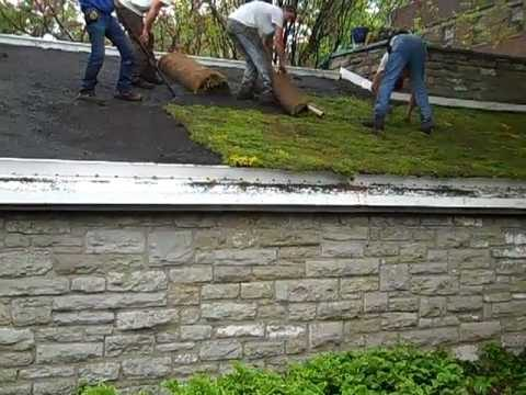 Unrolling Green Roof Sedum Mat