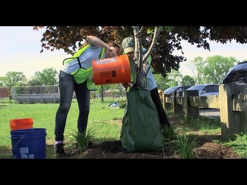 Healthy Trees Healthy Cities: Stewardship