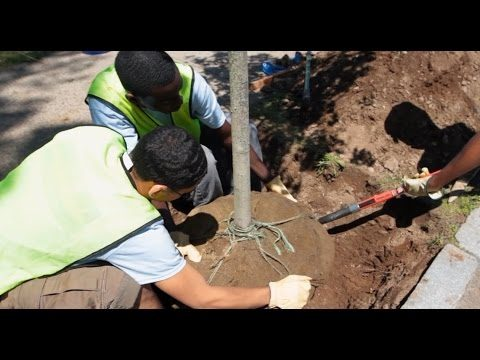 Healthy Trees Healthy Cities: Planting