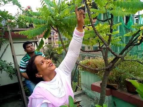 Visitors in My Rooftop Garden.( EPS-1). আমার ছাদ বাগানে দর্শনার্থী (পর্ব-১)।