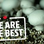 Take a tour of the largest organic mushroom farm in Canada | We Are The Best