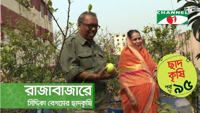 Rooftop farming | EPISODE 95 | HD | Shykh Seraj | Channel i | Roof Gardening | ছাদকৃষি |