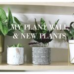 My New Plant Wall and New House Plants!!