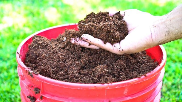 5 Benefits of Coconut Coir in Gardening