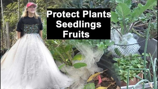 EASY Organic Pest Control – Vegetables Fruits Seedlings Plants in the Garden