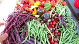 Vegetable Garden Tour & Tips 9/3/2018: Harvest, Cool Weather Transition, Seed Starts
