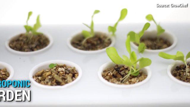 Growchef hydroponic garden