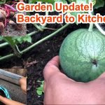 Garden Vlog 2 Update!  UK  Learn to grow your own food, whilst it's still legal