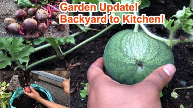 Garden Vlog 2 Update!  UK| Learn to grow your own food, whilst it's still legal