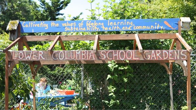Lower Columbia School Gardens, Longview WA