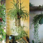 9 Best Indoor Hanging Plants – Let's Go Green