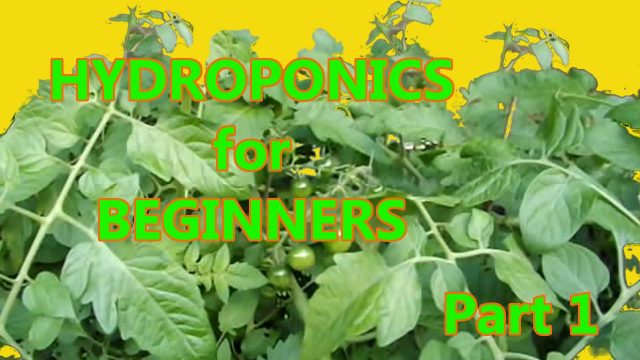 Hydroponics for Beginners: DWC homemade DIY Under $50 Part 1