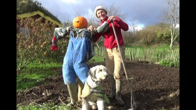 A Year In Our Vegetable Garden – November