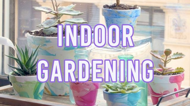 4 Brilliant Indoor Gardening Ideas