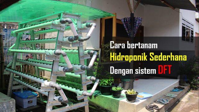 cara bertanam hidroponik sederhana di rumah dengan sistem DFT