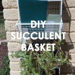 DIY Succulent Basket -Hanging Planter by Pop Shop America