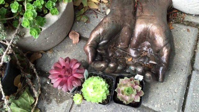 Lynn Krawczyk outdoor succulent garden