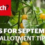 Vegetable gardening jobs for September – Which? Gardening