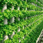 Vertical farming company to grow local produce for Texas – TomoNews