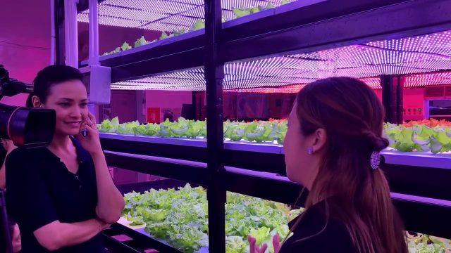 Vertical Indoor Farm in Singapore