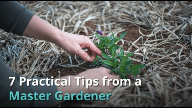 The Best Master Gardener Tips