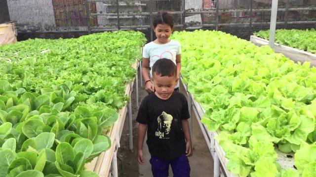 Hydroponics Farming in Cambodia, Bring children visiting Hydroponics Farm, urban farming, Phnom Penh