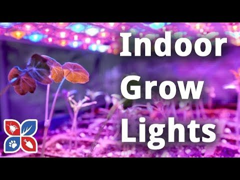 Indoor Grow Lights – Indoor Gardening Tips | DoMyOwn.com
