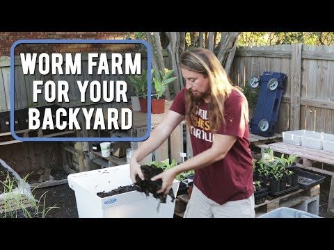 Worm Farm For Your Backyard!